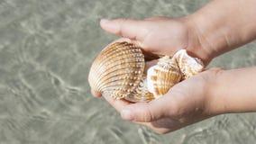 Cáscaras en las manos en el fondo del mar imagen de archivo