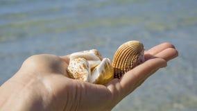 Cáscaras en las manos en el fondo del mar imagen de archivo libre de regalías