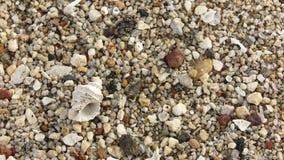 Cáscaras fósiles en la arena de la playa Imágenes de archivo libres de regalías