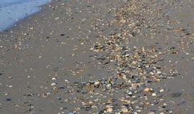 Cáscaras lavadas en la playa, yegua de Eraclea foto de archivo