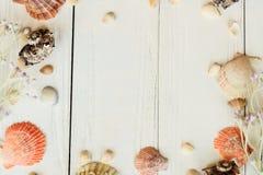 Cáscaras naturales en los tableros de madera Concepto del fondo de la playa Lugar para el texto Fotografía de archivo