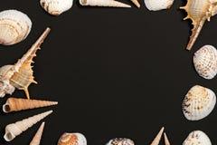 Cáscaras negras de la tabla y del mar Plantilla oceánica de la maqueta de las cáscaras Foto de archivo libre de regalías