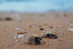 Cáscaras por el mar imagenes de archivo
