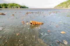 Cáscaras que aparecen después de caer el mar imagenes de archivo