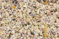 Cáscaras quebradas del mar, mejillones, ostra, blanco, amarillo, crustáceos, modelo Fotos de archivo libres de regalías