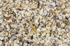 Cáscaras quebradas del mar, mejillones, ostra, blanco, amarillo, crustáceos, modelo Imágenes de archivo libres de regalías