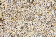Cáscaras quebradas del mar, mejillones, ostra, blanco, amarillo, crustáceos, modelo Fotos de archivo