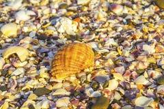 Cáscaras quebradas del mar, mejillones, ostra, blanco, amarillo, crustáceos, modelo Imagen de archivo libre de regalías