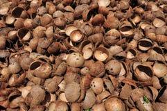 Cáscaras vacías del coco Imagen de archivo libre de regalías