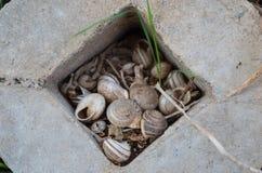 Cáscaras vacías en un agujero con la hierba y la tierra Imagenes de archivo