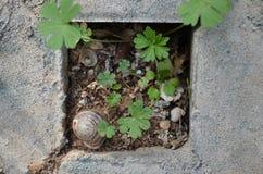 Cáscaras vacías en un agujero con la hierba y la tierra Fotos de archivo libres de regalías