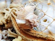 Cáscaras y alga marina Foto de archivo libre de regalías