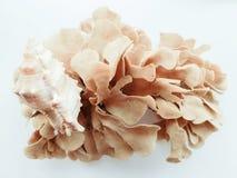 Cáscaras y alga marina Fotos de archivo libres de regalías