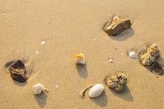 Cáscaras y coral del mar en la playa Imagen de archivo