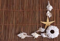 Cáscaras y estrellas de mar en fondo de la arena Fotografía de archivo