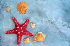 cáscaras y estrellas de mar grandes Imagenes de archivo