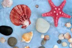 cáscaras y estrellas de mar grandes Imagen de archivo
