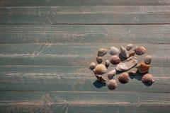 Cáscaras y madera del mar Imagen de archivo