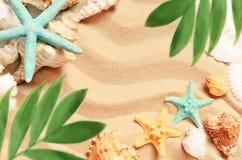 Cáscaras y palma del mar en el fondo de la arena Playa del verano Fotografía de archivo libre de regalías