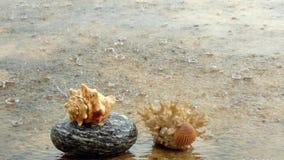 Cáscaras y piedra del mar Foto de archivo