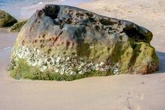 Cáscaras y piedra volcánica en la isla de Phu Qhoc Fotos de archivo