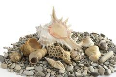 Cáscaras y rocas del mar Fotografía de archivo libre de regalías