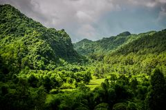 Cat Ba Island Rainforest royalty free stock images