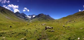 Cáucaso Foto de Stock