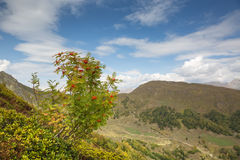 cáucaso Céu e montanha Rowan Foto de Stock