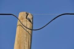 Câble électrique dangereux Images stock