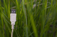 Câble blanc d'USB sur l'herbe - technologie verte Photo stock