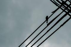 Câble d'île de moineau Photo libre de droits