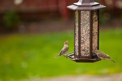 Câble d'alimentation d'oiseau Photographie stock