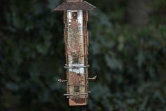 Câble d'alimentation d'oiseau Images libres de droits