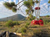 Câble d'alimentation d'oiseau dans l'horizontal de montagne Image stock