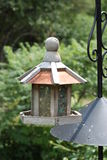 Câble d'alimentation de Chambre d'oiseau en été Image stock