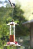 Câble d'alimentation de colibri Image libre de droits