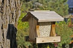 Câble d'alimentation en bois s'arrêtant d'oiseau Photos libres de droits