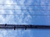 Câble de bleu de ciel d'oiseau Images libres de droits