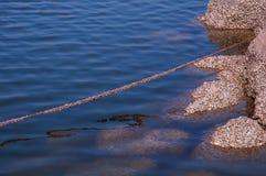 Câble en acier couvert d'organisme marin photo stock
