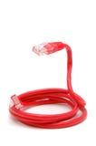 Câble rouge de réseau photographie stock