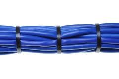 Câbles bleus de réseau Photos libres de droits