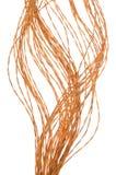 Câbles de couleur de réseau informatique Photo stock