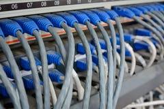 Câbles Ethernet reliés au serveur d'Internet d'ordinateur Photographie stock libre de droits