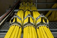 Câbles jaunes de réseau Images stock