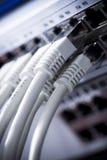 Câbles LAN Connectés à un commutateur Photographie stock libre de droits