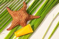 Câmara de ar da proteção dos Starfish e do sol na folha de palmeira Imagens de Stock