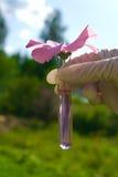 Câmara de ar de teste com líquido e a flor cor-de-rosa Foto de Stock