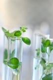 Câmaras de ar de teste com plantas pequenas Fotografia de Stock Royalty Free