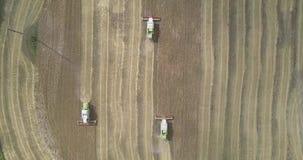 A câmera aumenta acima do campo de trigo maduro e das debulhadoras de funcionamento filme